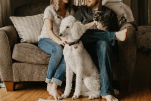 pets in divorce cases